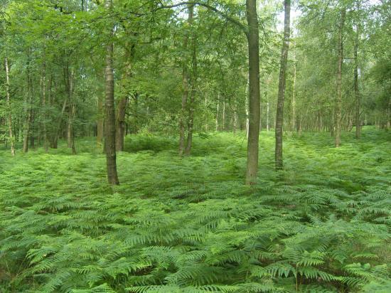 La forêt et son tapis vert.